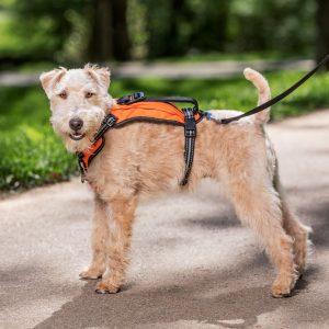 Walk-Along™ Outdoor Harness